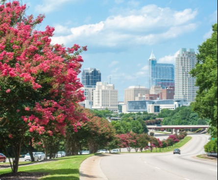 View of Raleigh from a highway lined with pink crepe myrtles.